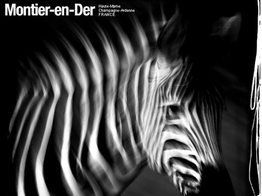 FESTIVAL PHOTO ET PEINTURE ANIMALIERE: L'animal dans toute sa splendeur et en images
