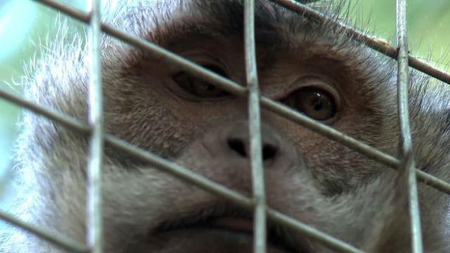 La torture des animaux sauvages va être punie