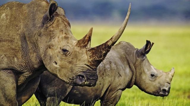 Photo © Martin Harvey / WWF. Cliquez ici pour accéder au site