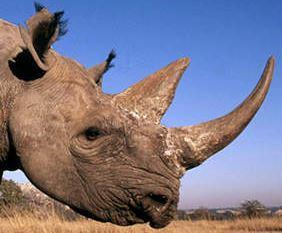 Photo (c) WWF