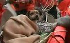 Le chien miraculé du tsunami du Japon