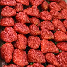 Les fraises pourront désormais se garder à température ambiante© Myrabella