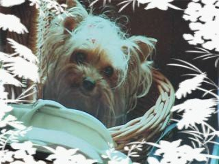 Minnie. 1999-2004