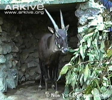 Cliquez ici ou sur l'image pour voir les vidéos (c) New York Zoological Society