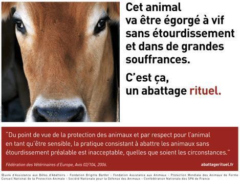 Cliquez ici pour visionner la vidéo sur le site de www.abattagerituel.com