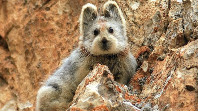 La photo d'Ili pika qui fait le buzz sur le net