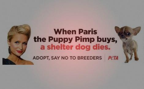 Image originale (c) PETA. Cliquez ici pour accéder au site français