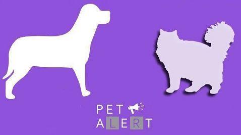 Pet Alert, l'outil pour retrouver un animal perdu
