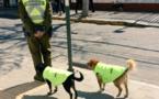 Vies de chiens