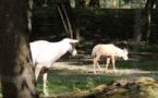 Abécédaire animal en vidéo - O