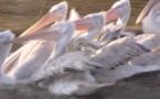 Abécédaire animal en vidéo - P