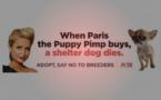 Polémique sur l'élevage canin