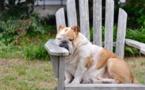 Comment rafraîchir nos animaux de compagnie en période estivale