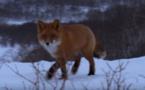 Abécédaire animal en vidéo - R