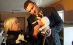 Chats et chiens brûlés, écrasés, empoisonnés pour l'EURO 2012