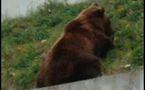 L'ours Finn pourra survivre