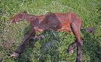 On n'achève plus les chevaux en Espagne