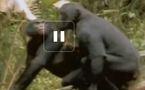 La vie privée des animaux 6