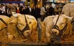 De la douleur au bien-être des animaux d'élevage