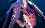 La pieuvre avec la caméra