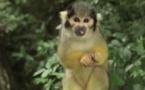 Abécédaire animal en vidéo - S