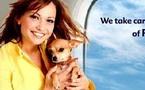 Animal Airways International propose un nouveau service pour voyager avec des animaux domestiques