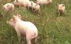 Un test simple pour vérifier le bien-être des animaux