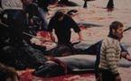 Massacre des baleines sur les îles Féroé