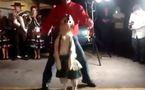 Animaux faisant la fête: chiens dansants