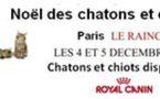 Le Noël du Chaton 2010 - Téléthon félin