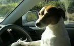 Un chien vole une voiture!