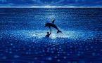 Le dauphin Joséphine, héroïne du Grand bleu, est décédée