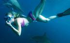 Expérience inédite avec des requins