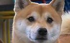 Le chien comme antistress idéal