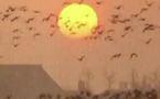 Journée mondiale des oiseaux migrateurs 2012