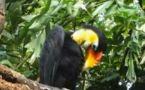 Une forêt tropicale humide pour le zoo de Leipzig