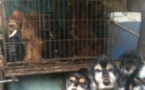 265 chiens d'élevages saisis par la justice en France