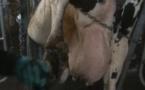 La douleur animale en film
