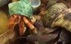 Abécédaire animal en vidéo - B, deuxième partie