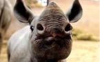 22 septembre 2013: Journée mondiale du rhinocéros