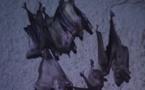 Abécédaire animal en vidéo - C, quatrième partie