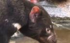 Abécédaire animal en vidéo - D, deuxième partie