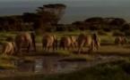 Abécédaire animal en vidéo - E, deuxième partie