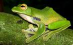 De nouvelles espèces animales découvertes dans la région du Grand Mékong