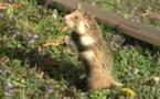 Abécédaire animal en vidéo - H, première partie