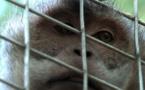 La torture des animaux sauvages va être enfin punie