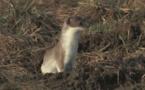Abécédaire animal en vidéo - H, deuxième partie