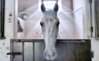 L'image du cheval angélique
