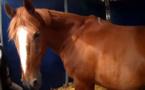 Les meilleures vidéos du concours Le cheval, c'est trop génial