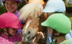 Les poneys stars des Champs-Élysées